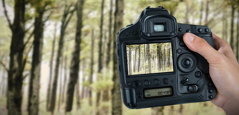 "Types Of Hunting Cameras ""Complete guide For The Users"""